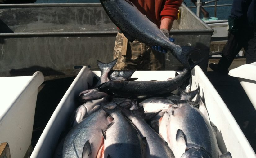 "California Drought ""Relief"" Bills Threaten Salmon"